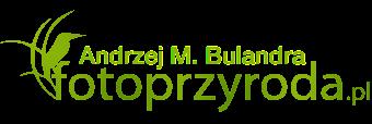 Andrzej M. Bulandra - fotografia przyrodnicza